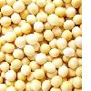 Soybean Extracts